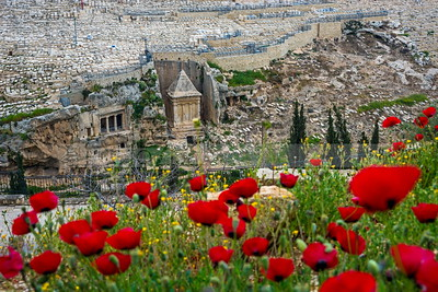 Zacharias' Tomb in Kidron Valley, with red poppies