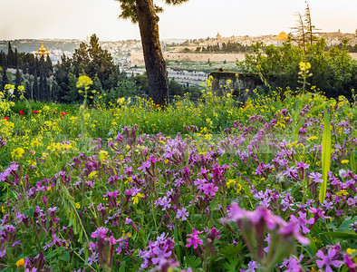 Jerusalem with wild flowers