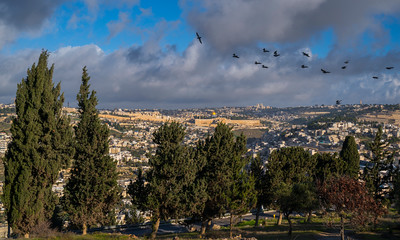 Birds over Jerusalem