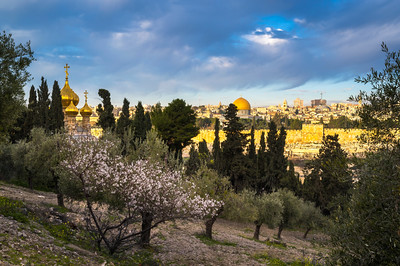 Golden Jerusalem with blossoming almond tree
