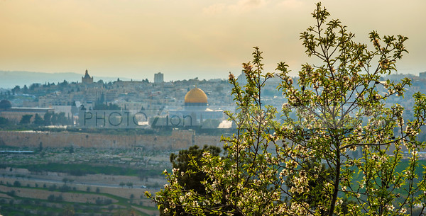 Jerusalem with almond tree