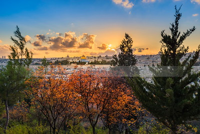 Autumn sunset  in Jerusalem -  fall trees on the Mount of Olives overlooking the Old City