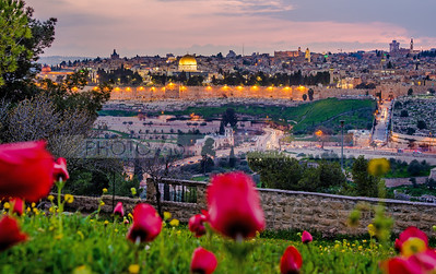 Jerusalem with red flowers