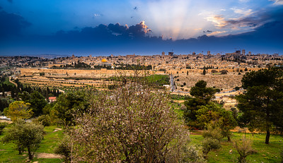 Jerusalem sunset with almond tree