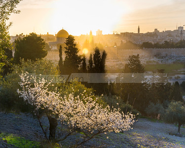 Jerusalem and the Mount of Olives with blossoming almond tree
