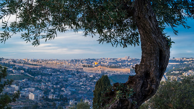 Jerusalem view with an olive tree