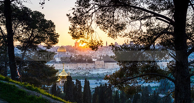 Old City Jerusalem view through the trees on Mount of Olives