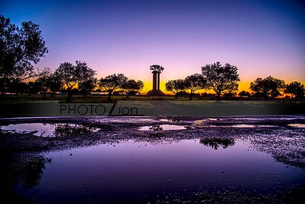Olive Trees of Peace at sunrise