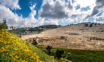 View of Kidron Valley and the Mount of Olives, with yellow flowers