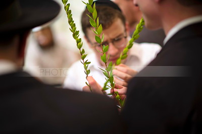 Four Species - Sukkot (Editorial use only)