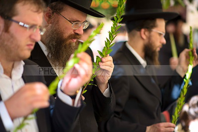Jewish Orthodox men checking the Four Species - Sukkot preparations