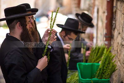 Jewish Orthodox man checking Hadas (myrtle) leafy branches of the Four Species - Sukkot preparations in Mea Shearim