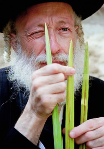 Selecting the four species - lulav