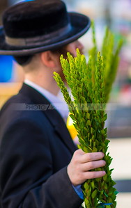 Jewish Orthodox man holding a bunch of Hadas (myrtle) leafy branches of the Four Species - Sukkot preparations in Mea Shearim