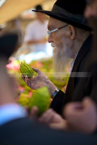 Four Species, Etrog - Sukkot (Editorial use only)
