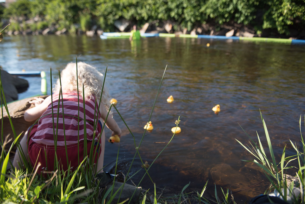 . 6 year old Atherton Perry Mason Conklin helps move stubborn ducks down the river during Sunday\'s duck race at Riverfront Park in Fitchburg on July 9, 2017.  SENTINEL & ENTERPRISE JEFF PORTER