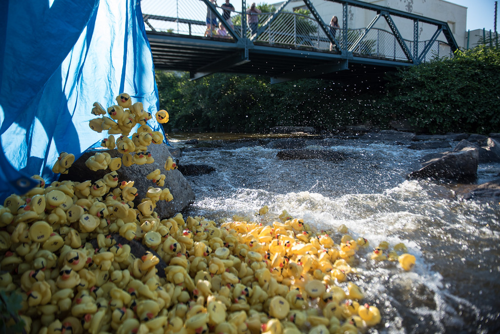. A big pile of rubber dunks is dumped into the river during Sunday\'s duck race at Riverfront Park in Fitchburg on July 9, 2017.  SENTINEL & ENTERPRISE JEFF PORTER