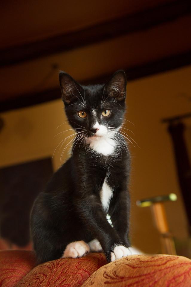 Our cat; Skrid.