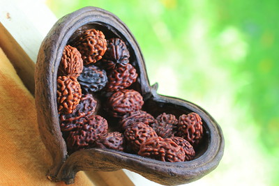 Heart-shape dried fruit with 27 Rudrakshas