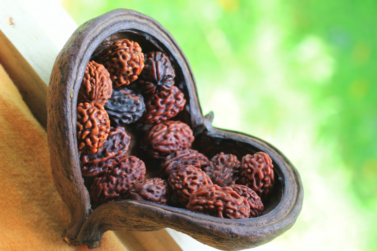 Heart-shape dried fruit with 27 Rudrakshas