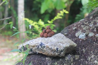 10 beads mini-pyramid, various trees