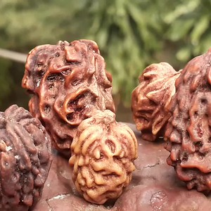 contacts to request info about Rudraksha: place with Kuberakshi