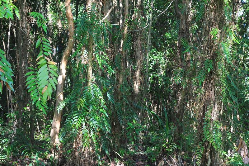 Sacred forest Behind Ex-Home