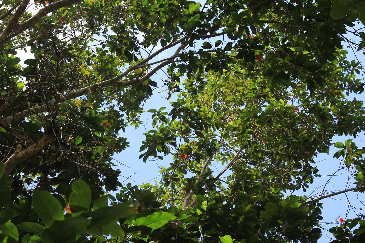 fruit season @Second Tree - big