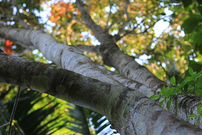 Tree growing with coconut palm