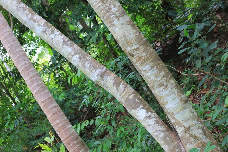 South tree, or PrimAlbero as we saw it