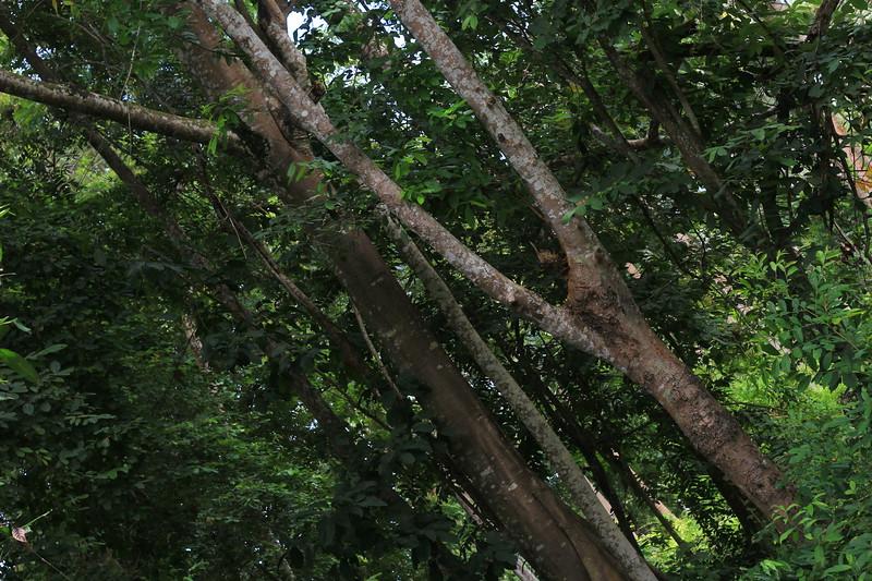 4 trees area to eastside