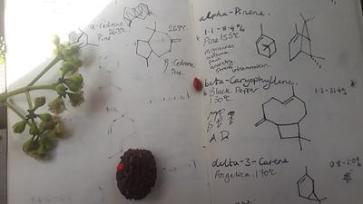 Nishey formulas