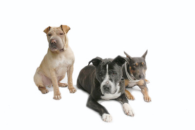 Rufus, Ralph & Ricki