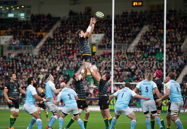 Northampton Saints vs Newcastle Falcons, LV= Cup, Franklin's Gardens, 1 November 2014
