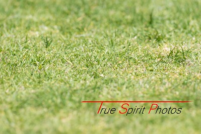 RugbyWA_State_Championships_North_vs_South_02 10 2016-22