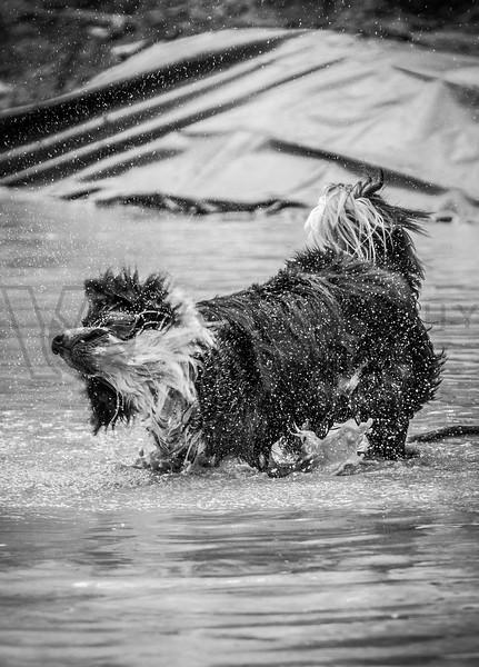 2014 Montana Mucker - Helena - mud pool (f)-165