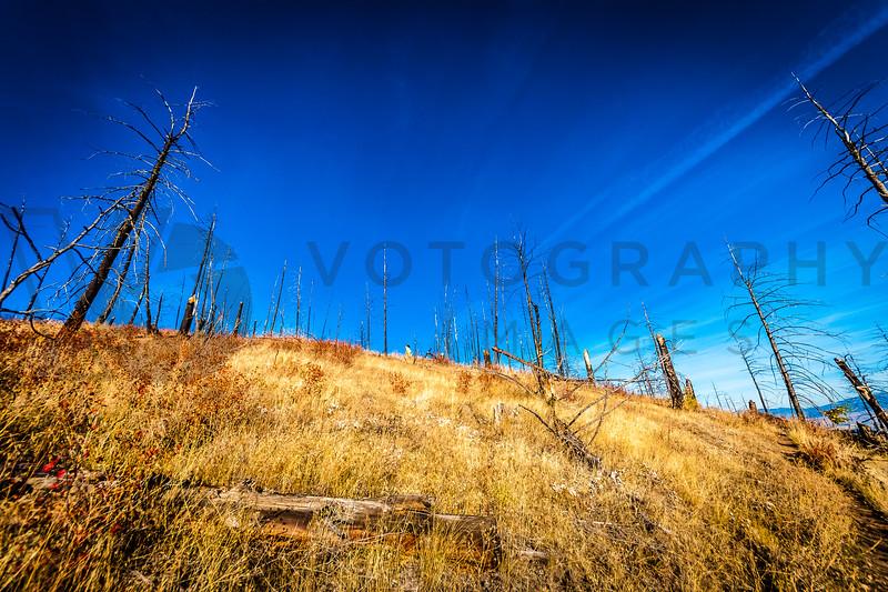 2013 Blue Mountain 30K (fs)-228
