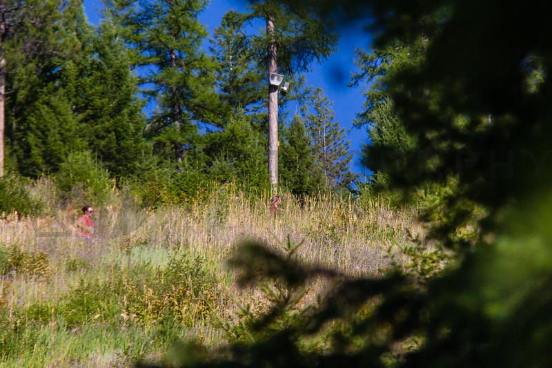 2013 Marshall Mountain Trail Run (fs) -253