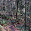 Dan's trail
