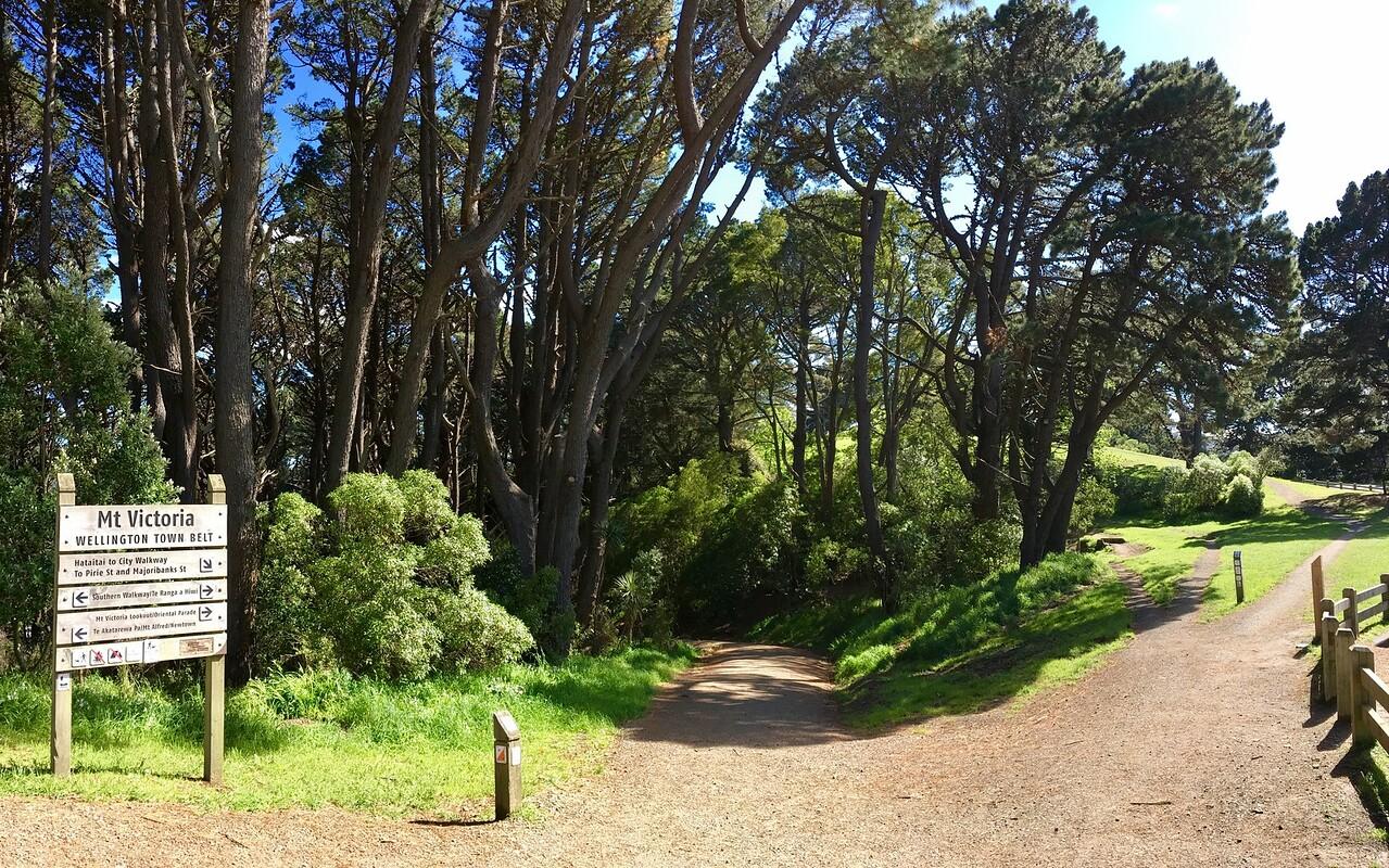 Mt Victoria trail network is amazing