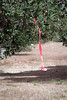 The course was marked by pink surveyor ribbons and flour.