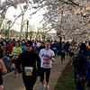 Cherry Blossom 10 Miler
