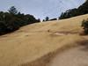 Grassy track.