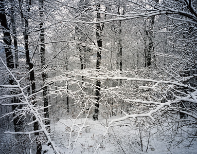 Woodland and snow in the Bavarian Alps