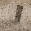Fence Post, Joyce Valley, Washington