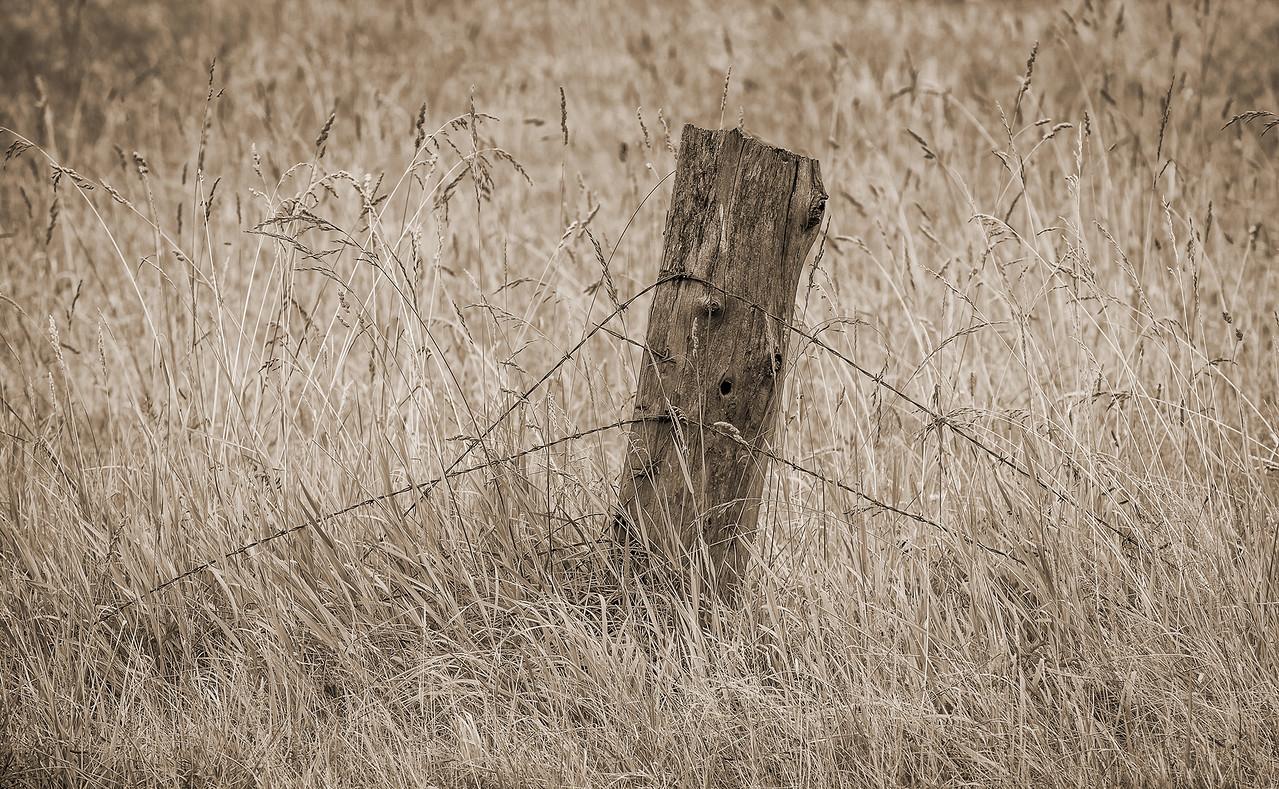 Fence Post, Joyce Valley, Washington
