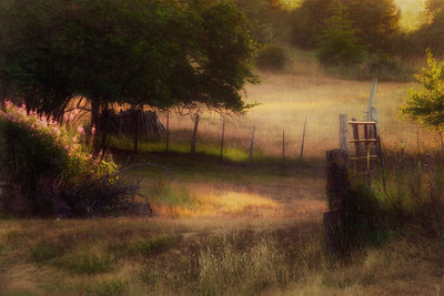 Rural Evening Scene, Joyce Valley, Washington
