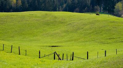 Cow Pasture near Port Angeles, Washington