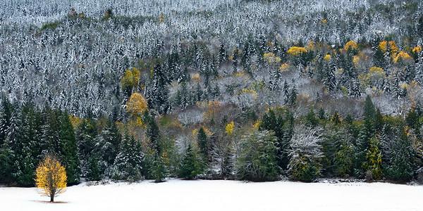 Early November Snow near Joyce, Washington, 2017