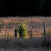 Fence Line, Joyce Valley, Washington